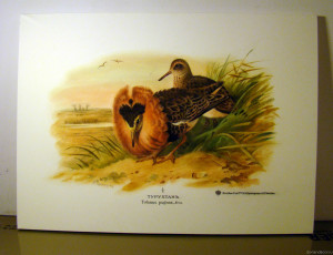 "Copy of lithography ""Ruff"" by Irina Agalakova"