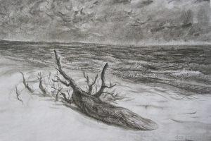 Александр Медведев - Сухое дерево на берегу. Швеция. Бумага, китайская тушь. 40х60 см. 2010 г.
